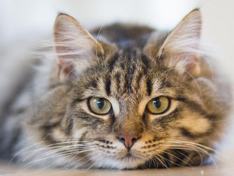 1200-pexels-photo-cat-animal-126407.jpg